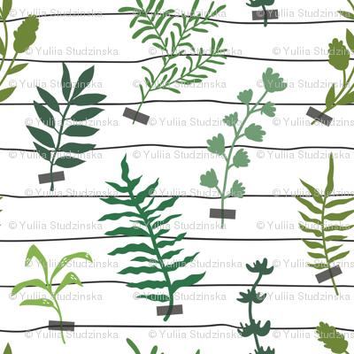 herbarium_line small