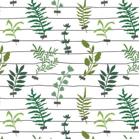 herbarium_line small fabric by yuliia_studzinska on Spoonflower - custom fabric