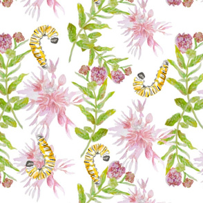 Milkweeds and Caterpillars