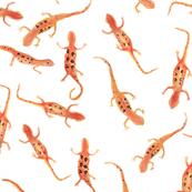 Red Eft Salamanders
