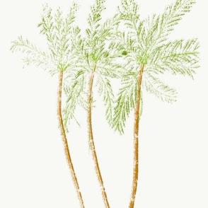 Aikahi palm