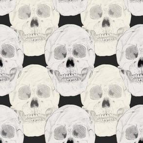 Skulls Black Background