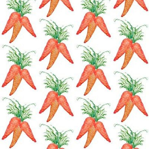 carrot bunch watercolor