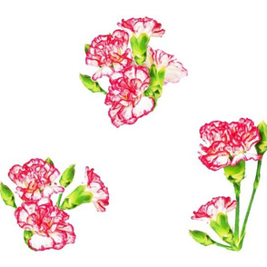 CarnationsPatternOnWhite