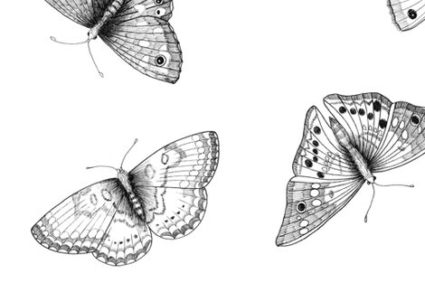 Rrbuck-eye-plus-black-and-white-butterflies_shop_preview