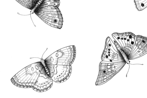 Scattered black and white butterflies  fabric by vicky_pratt_illustrator on Spoonflower - custom fabric
