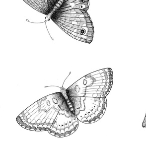 Scattered black and white butterflies