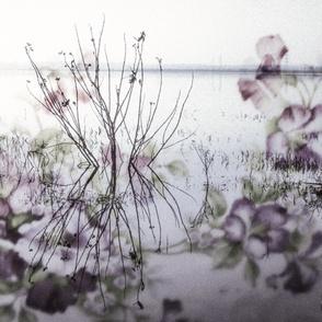 Floral Lake