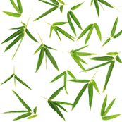 Watercolor Bamboo Leaves on White