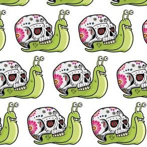 Sugar Skull Snail