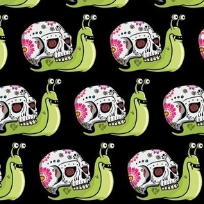 Sugar Skull Snail Black Background
