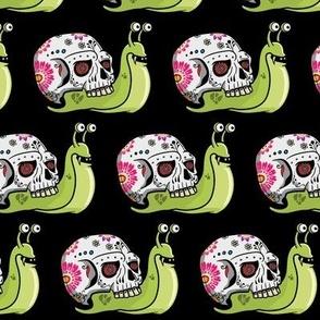 Sugar Skull Snail Black Background
