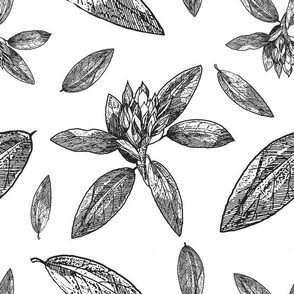 Large Scale Rhododendron, Flower Line Drawing, Upholstery Floral