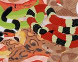 Snakepattern1_thumb