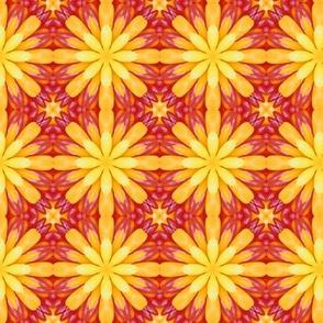 Jelly Bean Yellow Flower