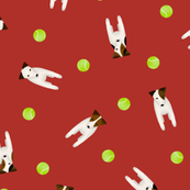 JRT / PRT dogs and their tennis balls