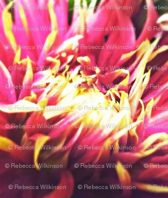 Spikey Petals