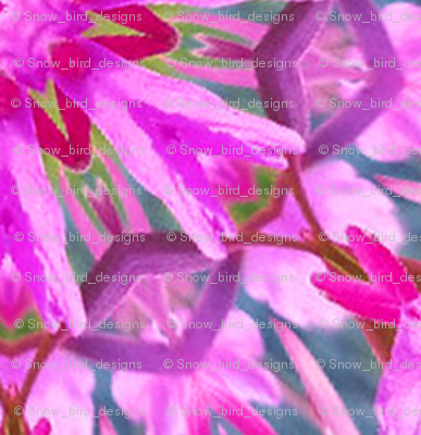 Summer Fireweed in Alaska