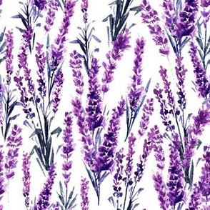 Lavender Watercolor Seamless Pattern. Aquarelle Paintings of Lavandula
