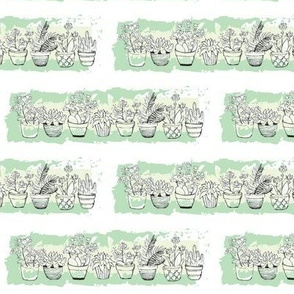 Succulents Potted Plants Green