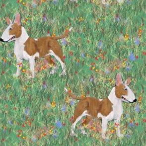 Bull Terrier in Wildflower Field