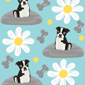 Daisy Day Pup / Boston Terrier