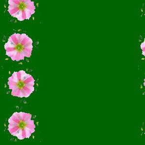 Petunia on Green