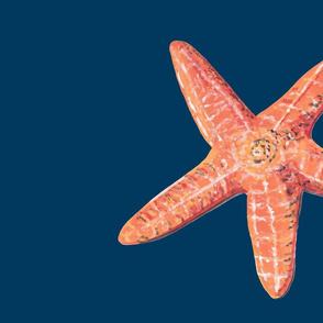 Sea Star on FQ BLue