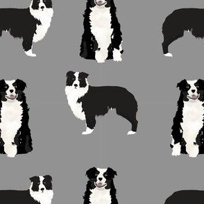 australian shepherd - black and white, dog, dogs, australian shepherd, aussie dog