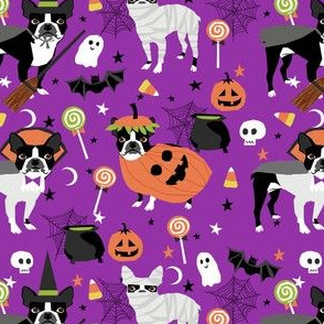 boston terrier halloween dog costume, halloween dog, dog breed, witch, pumpkin, candy, cute dog - purple