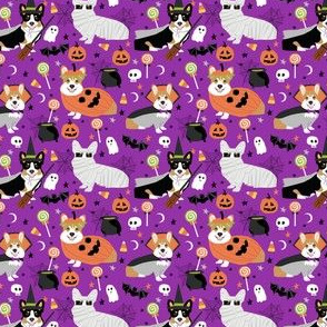 corgi and tricolored corgi dog halloween costume cute dogs, halloween,