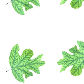 Double Green Leaf on White