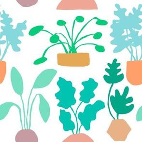 Houseplant Garden