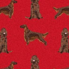 irish setter dog - dogs, dog print, pet, - red