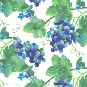 Spring Grapes