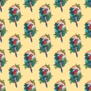 Macaw on Creme