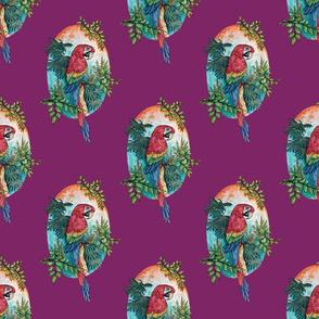 Macaw on Magenta