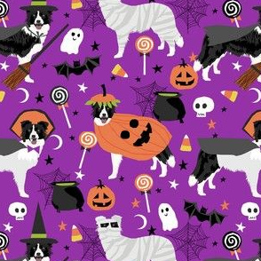 border collie halloween dog fabric - cute dog, dogs, dog breed, mummy witch, pumpkins -purple