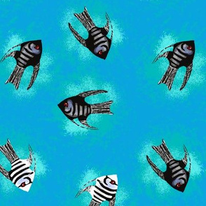 Angelfish on Blue