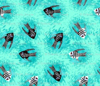 Angelfish on Turquoise