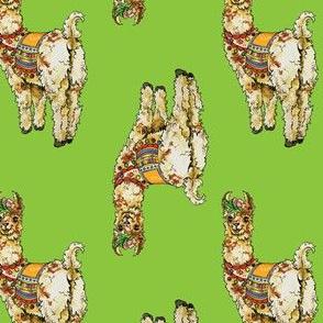 Sassy Llama on Green