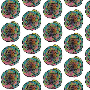 raninbow roses flowers