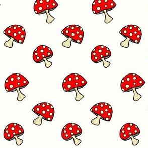 Fly Agaric fungus / Red polka-dot mushroom  on white