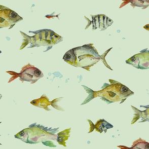Colourful Fishies