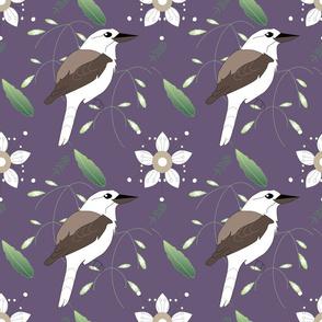 Kookaburra and tickbush