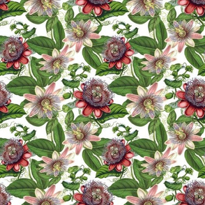 Passiflora Vintage Pattern- Small - 10,5in