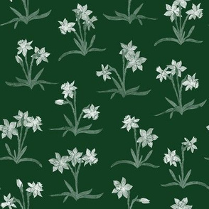 tiny chalk white narcissus on chalkboard green