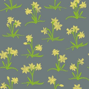 tiny bright daffodils on cool grey