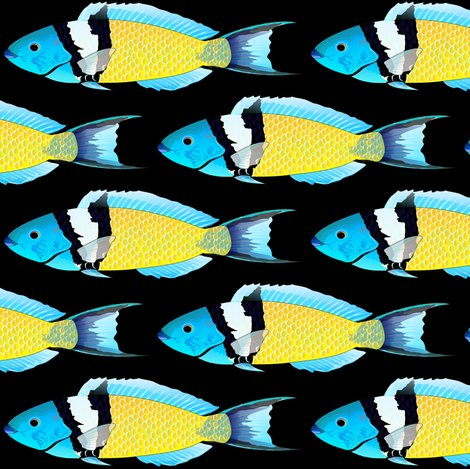 Rblueheadwrassessfbb_shop_preview