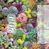 Succulent 2019 Calendar tea towel rev
